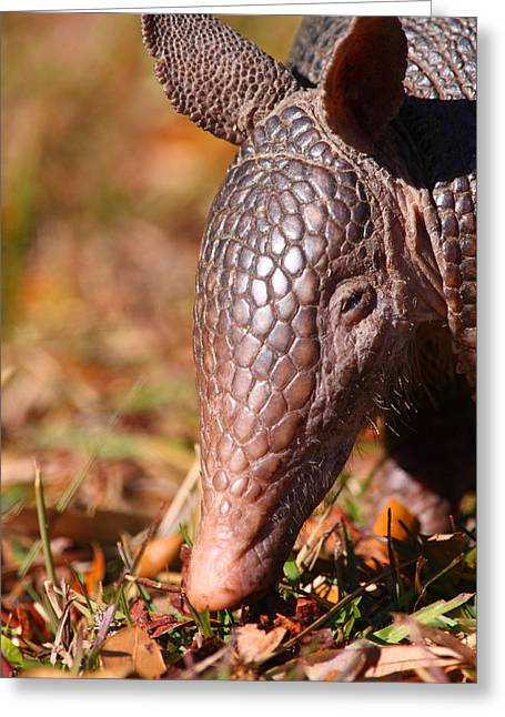 Nine-banded Armadillo Portrait Greeting Card by Bruce J Robinson