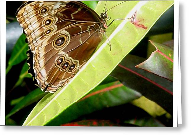 Greeting Card featuring the photograph No Nectar Here by Frank Wickham