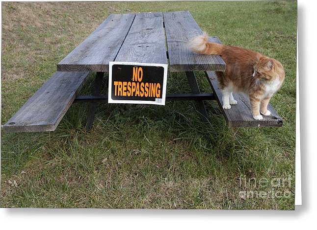 No Trespassing Greeting Card by Jeannette Hunt