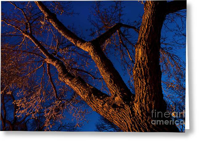 Nocturnal 6 Greeting Card