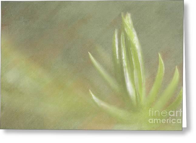Norfolk Pine Tip Greeting Card by Christine Amstutz