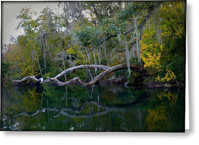 North Florida River Reflections Greeting Card by Carla Parris