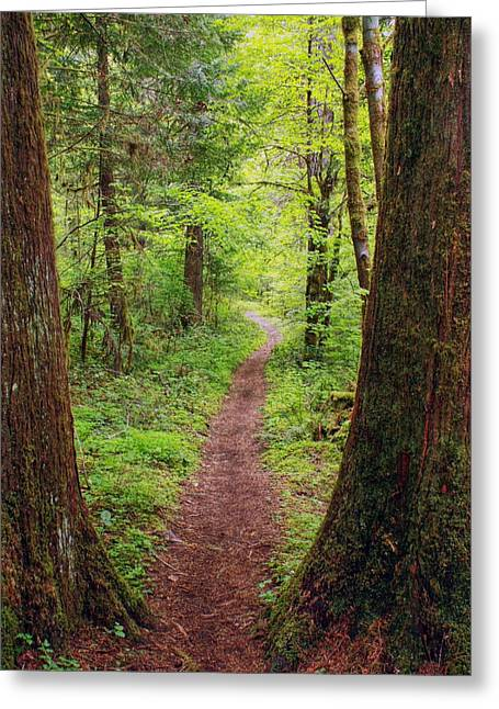 Greeting Card featuring the photograph North Umpqua Trail by Tyra  OBryant