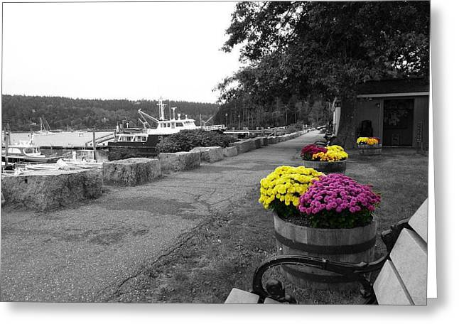 Greeting Card featuring the photograph Northeast Harbor by Kelly Reber