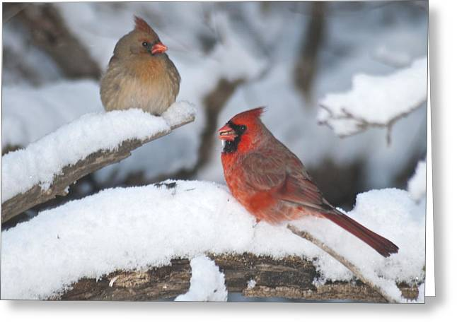 Northern Cardinal Pair 4284 2 Greeting Card by Michael Peychich