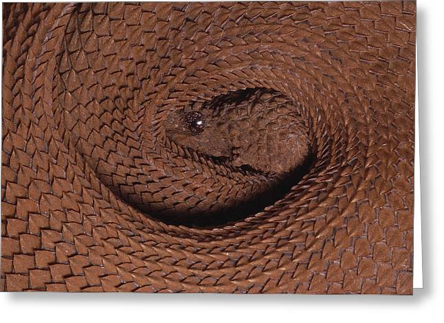 Northern Eyelash Boa Trachyboa Greeting Card by Pete Oxford