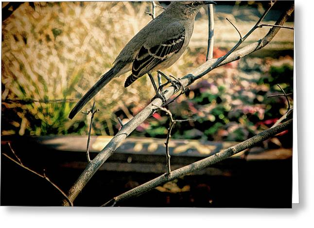 Northern Mockingbird On The Highline Greeting Card by Chris Lord