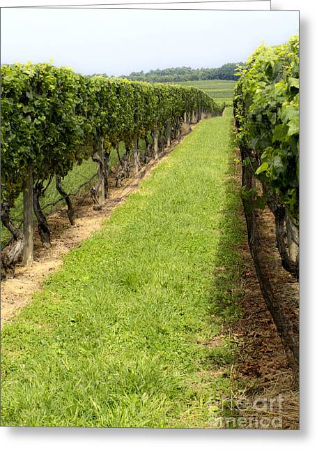 Northfork Vineyard Greeting Card by Leslie Leda