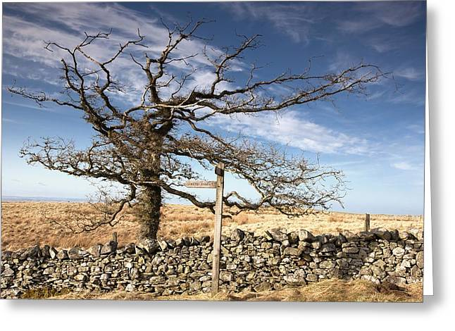 Northumberland, England A Leafless Tree Greeting Card by John Short