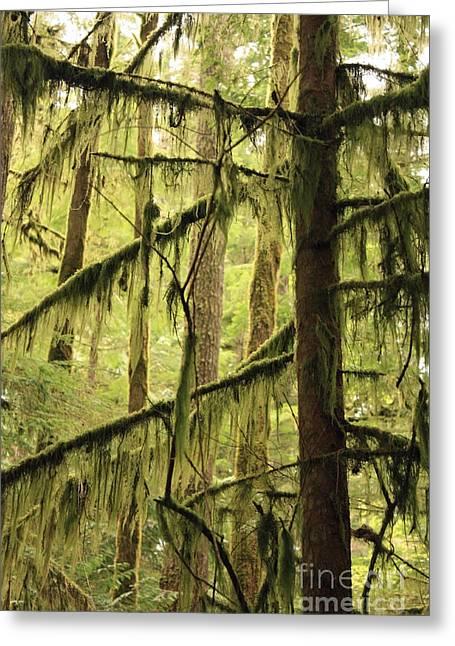 Northwest Mossy Tree Greeting Card by Carol Groenen