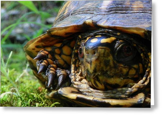 Greeting Card featuring the photograph Nosey Turtle by Chad and Stacey Hall