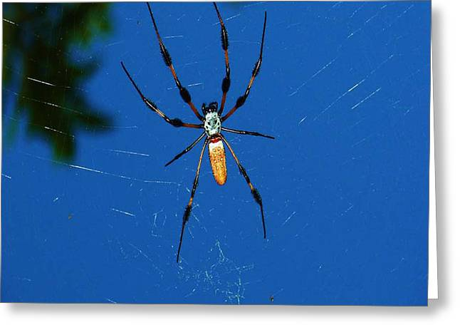 Greeting Card featuring the photograph Not-so Itsy-bitsy Spider by Joy Braverman