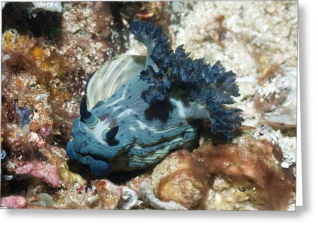 Nudibranch Greeting Card by Georgette Douwma