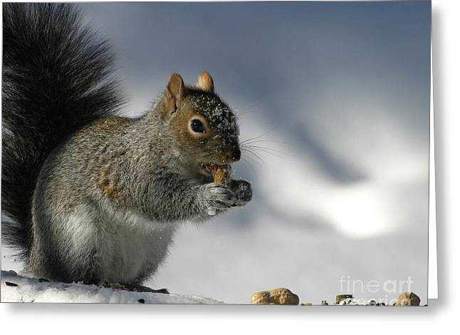Nutty About Winter Greeting Card