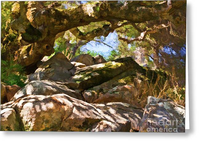 Oak Canopy Greeting Card