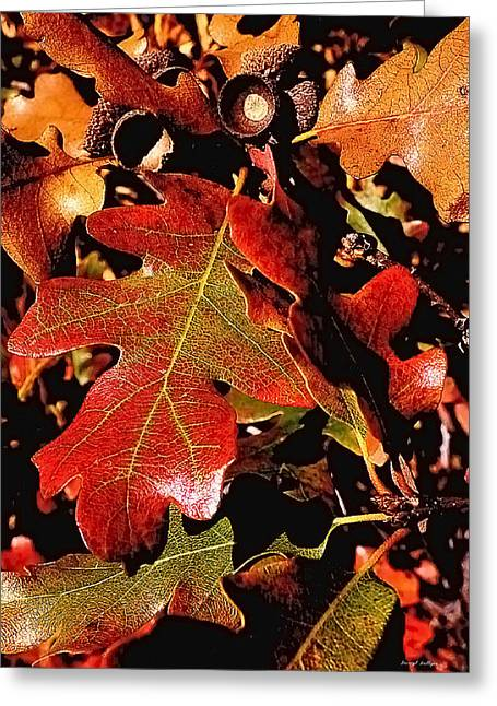 Oak Colors Greeting Card by Darryl Gallegos