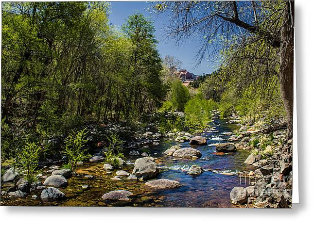 Oak Creek Greeting Card by Robert Bales