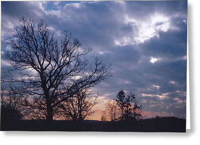 Oak In Sunset Greeting Card