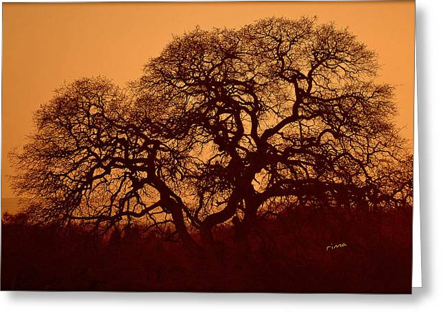 Greeting Card featuring the photograph Oak Tree At Sunset by Rima Biswas