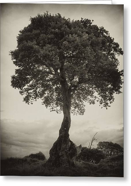 Greeting Card featuring the photograph Oak Tree by Hugh Smith