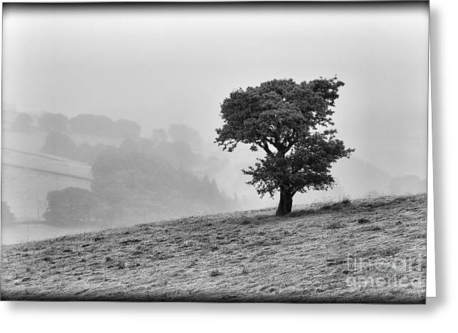 Oak Tree In The Mist. Greeting Card by Clare Bambers