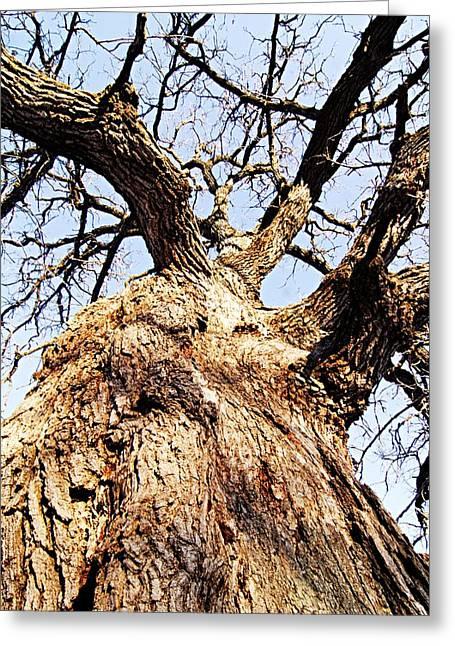 Oak Tree Greeting Card by Larry Ricker