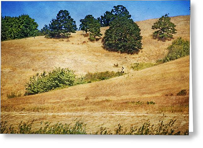 Oaks On Grassy Hill Greeting Card by Bonnie Bruno