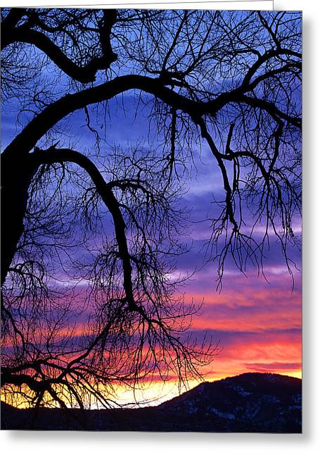 Greeting Card featuring the photograph Obeisance by Jim Garrison