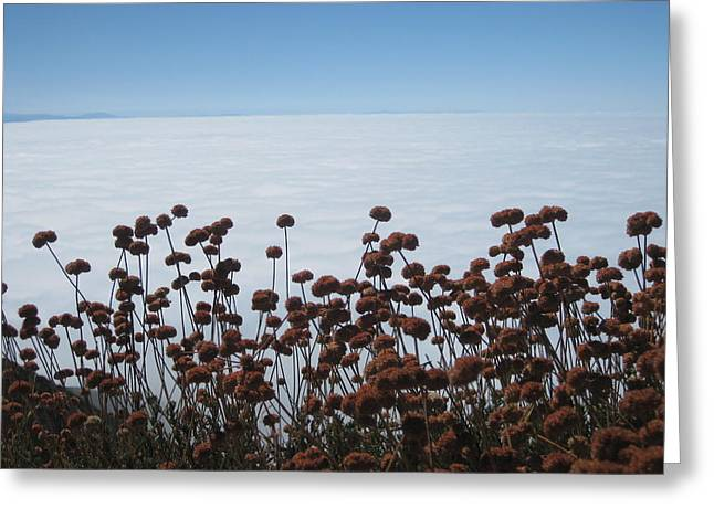 Ocean Of Clouds Greeting Card by Diana Poe