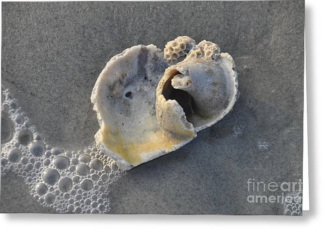 Greeting Card featuring the photograph Ocean's Gift by Cheryl McClure