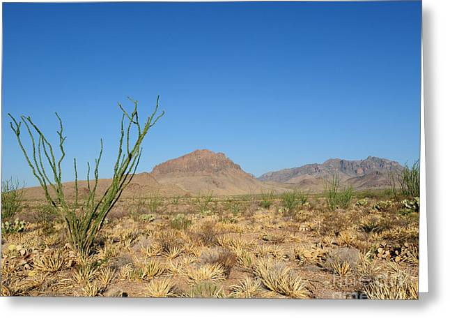 Ocotillo And Mountain Greeting Card