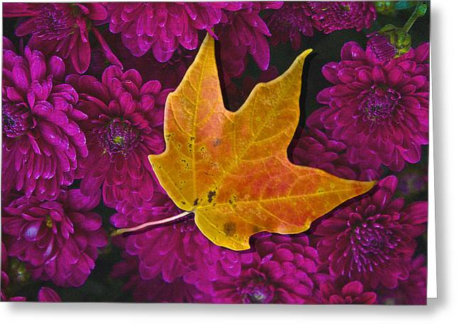 October Hues Greeting Card by Paul Wear