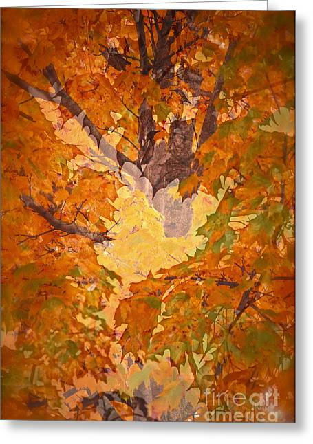 October In Washington Greeting Card by Gwyn Newcombe