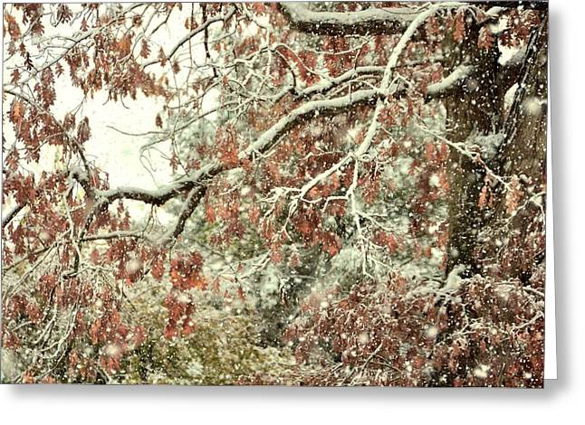 October Snowstorm Greeting Card by JAMART Photography