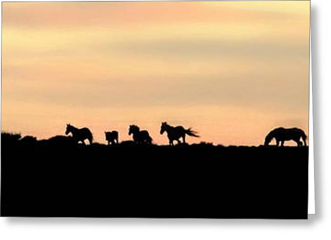 Off Into The Sunset Greeting Card by Donna Duckworth