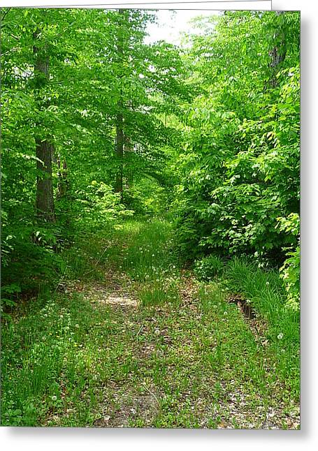 Off The Beaten Path Greeting Card by Michael Carrothers