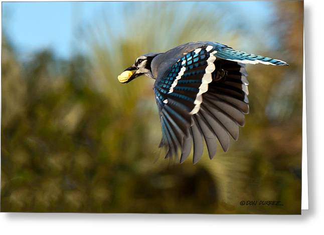 Off To The Nest Greeting Card by Don Durfee