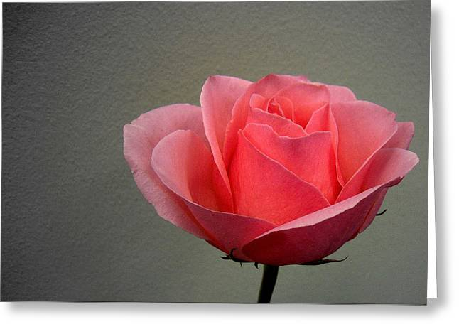 Office Rose Greeting Card by Al Cash