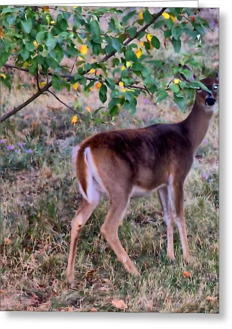 Oh Deer Me Greeting Card by Myrna Migala