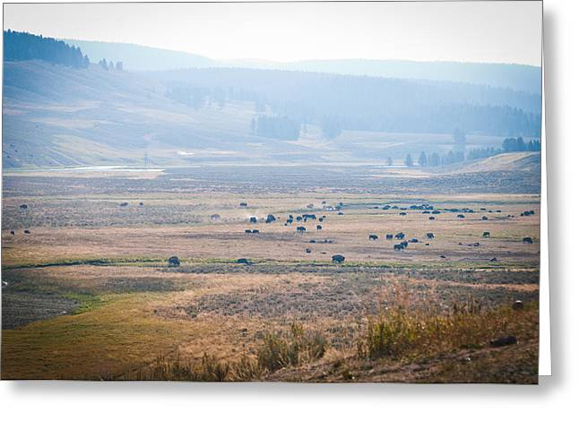 Greeting Card featuring the photograph Oh Home On The Range by Cheryl Baxter