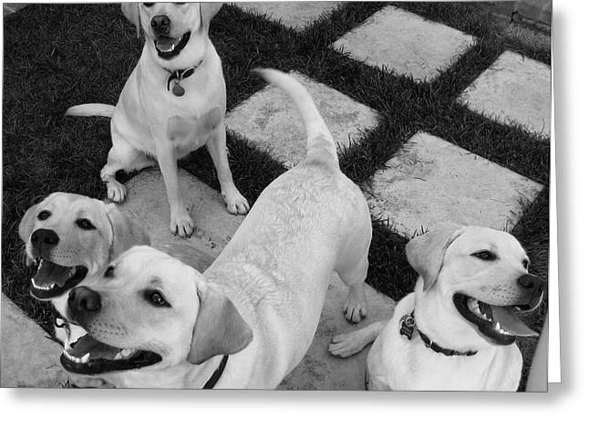 Oh How They Laughed Greeting Card by Kim Aberle