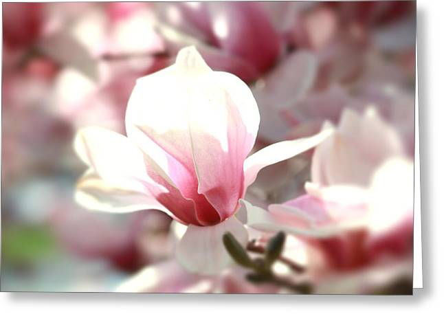 Oh Magnolia Greeting Card by Jenna Mackay