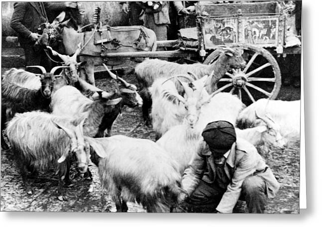 Old Palermo Sicily - Goats Being Milked At A Market Greeting Card by International  Images