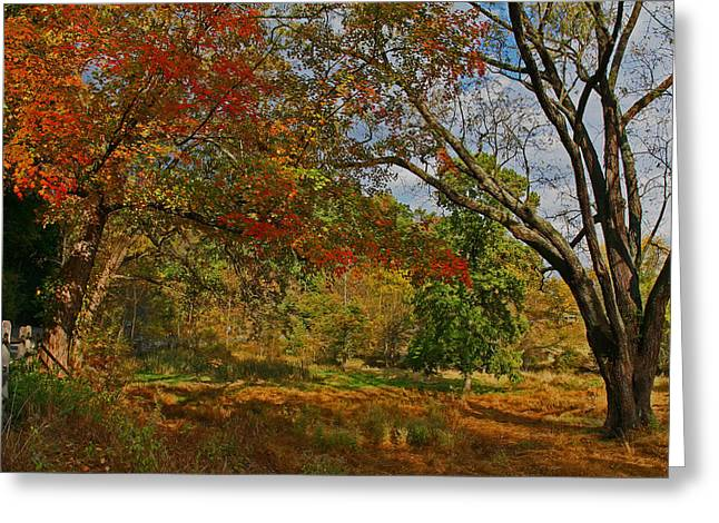 Old Tree And Foliage Greeting Card