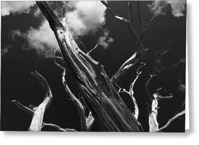 Greeting Card featuring the photograph Old Tree by David Gleeson