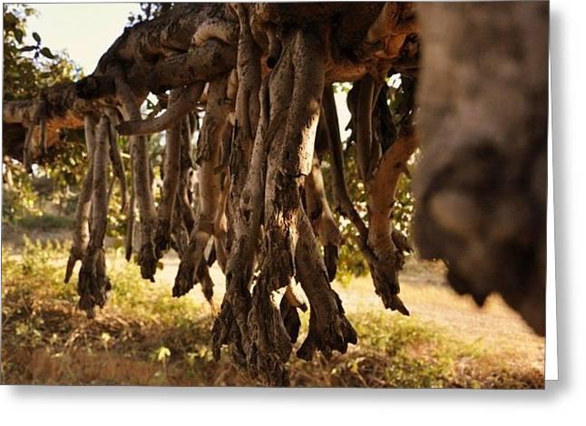 Old Tree Roots Greeting Card by Parikshat sharma