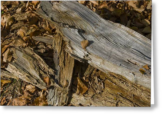 Old Tree Trunks And Leaves Decaying Greeting Card by Todd Gipstein