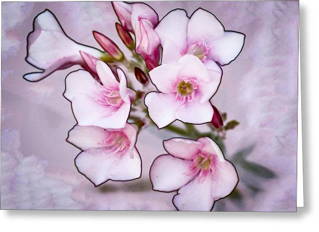 Oleander Blossoms Greeting Card by Jim Painter