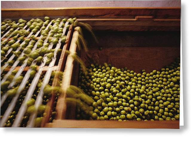 Olives Harvested And Readied Greeting Card by Sisse Brimberg