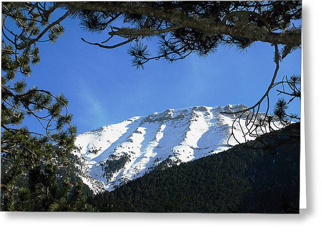 Olympos Through Firs Greeting Card by Andonis Katanos